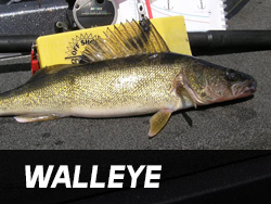 Lake Gogebic Walleye Fishing
